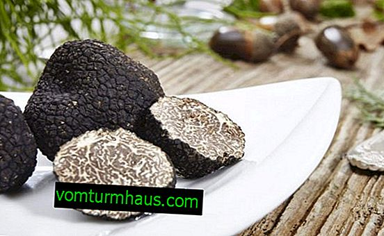 Truffle mushroom: composition and BZHU, properties, contraindications