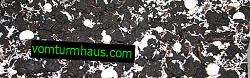 La composición y preparación del sustrato para los hongos de bricolaje.