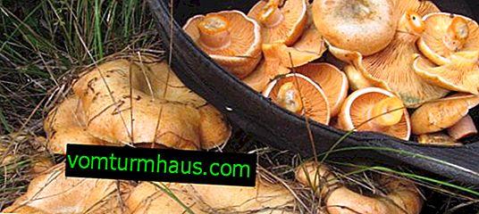 Hur många minuter ska man laga svamp