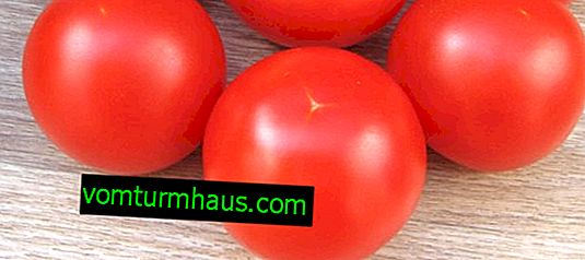 "Tomatoes ""Sanka"": characteristics, agricultural cultivation"