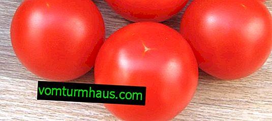 "Домати ""Санка"": характеристики, земеделско отглеждане"