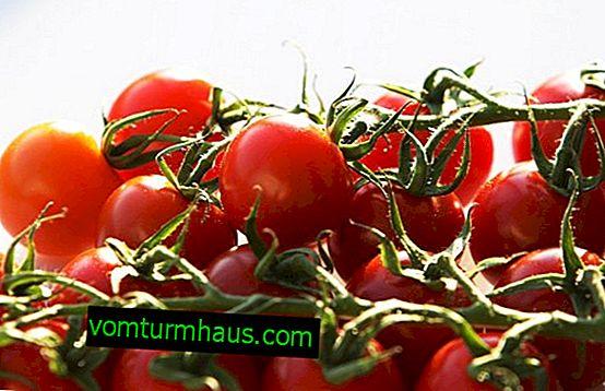 Saltning af cherrytomater: de bedste opskrifter og trin-for-trin-instruktioner til saltning