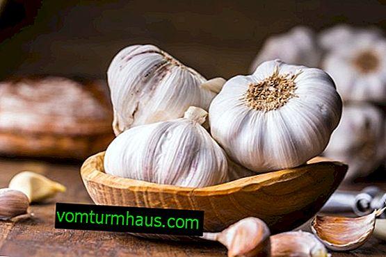 Jak nakládat česnek rychle doma