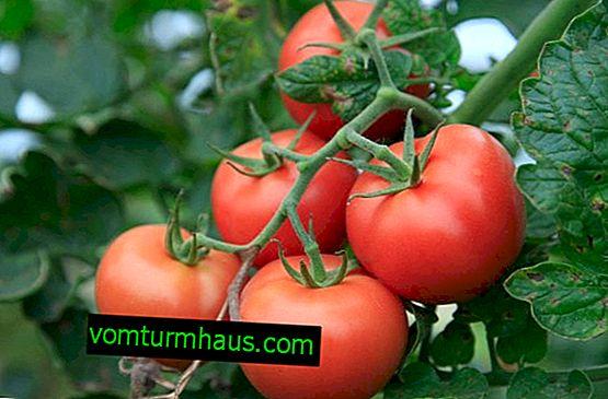 Hur och varför man behandlar tomater med jodserum