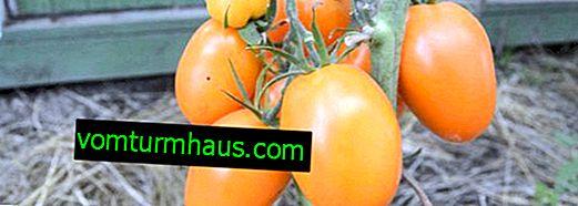 "Tomater ""Chukhloma"": beskrivning, jordbruksodling"