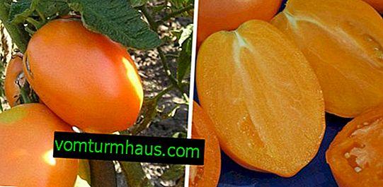 """Tomate """"Golden Koenigsberg"""": Beschreibung und Merkmale der Sorte, Anbau und Pflege"""