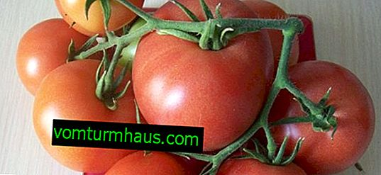 "Tomatoes ""Raspberry Empire"": description, agricultural cultivation"