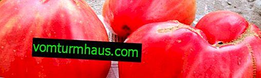 """Tomate """"Père"""": caractéristiques de la variété, plantation, culture et soin"""