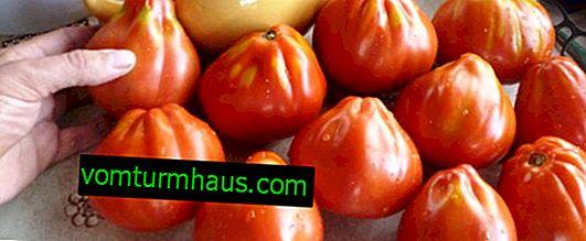 """Tomates """"Buffalo Heart"""": características, cultivo, técnica agrícola"""