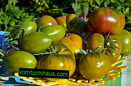 "Tomato ""Swamp"": description of the variety, features of cultivation and care"