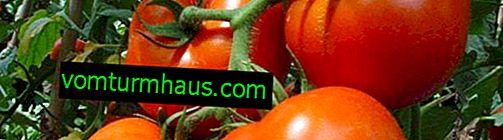 """Tomater """"Liana"""": sortsbeskrivelse, dyrkning af landbrugsteknikker"""