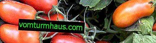 Tomates Gulliver: descripción, técnica agrícola de cultivo.