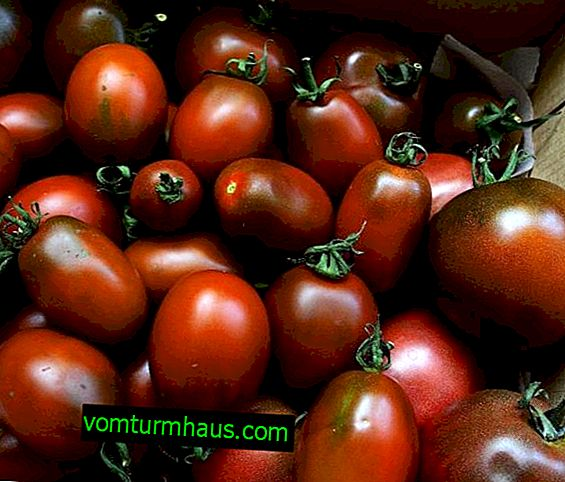 "Tomatoes ""Black Moor"": characteristics, features of cultivation"