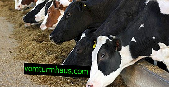Cattle feed: composition, nutrition, species analysis
