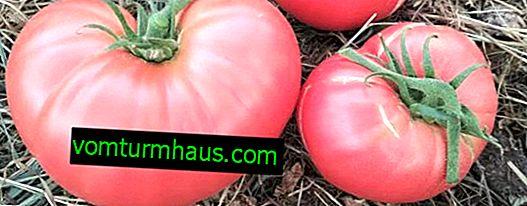 """Tomates """"Raspberry Giant"""": descripción, cultivo, técnica agrícola"""