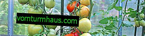 Защо доматите попадат в оранжерията и какво да правя