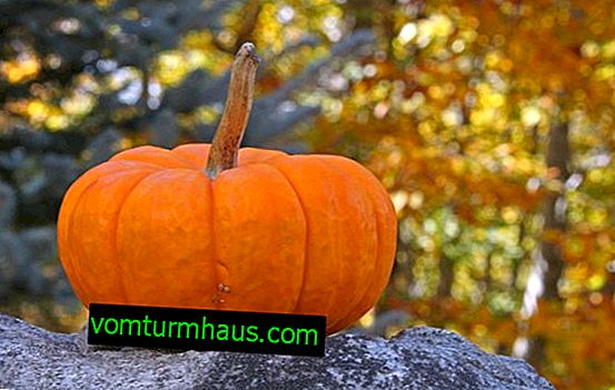 The benefits of pumpkin for the woman's body: features and tips for use