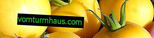 Persika tomater: egenskaper, funktioner för odling