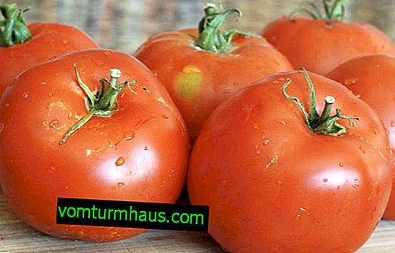 """Tomat """"Ultra-early"""": beskrivning och utbyte av sorten, särskilt odling och vård"""