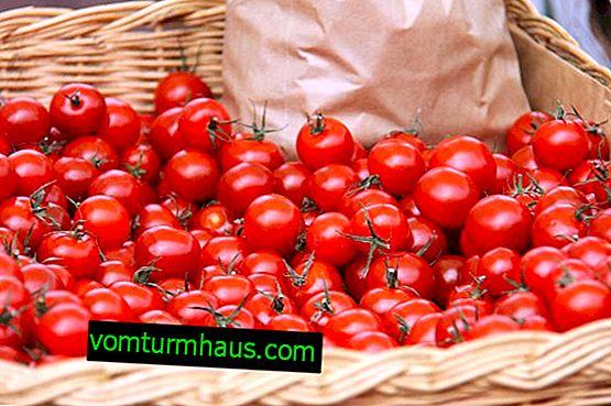 Cómo conservar los tomates cherry para el invierno: las mejores recetas con cocción paso a paso